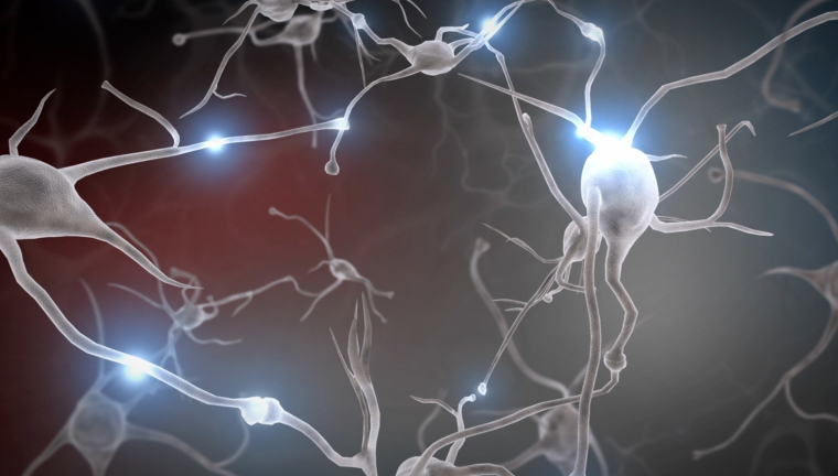 neurons-screenshot-brain development
